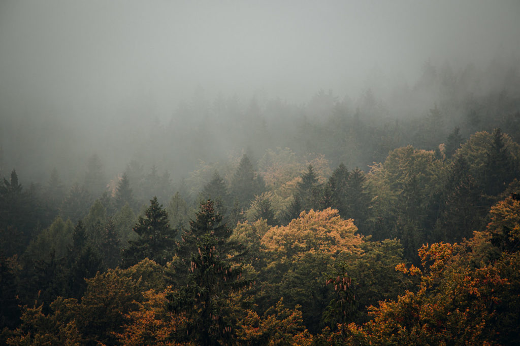 Großer Waldstein im Fichtelgebirge: Wunderschöne Mischwälder