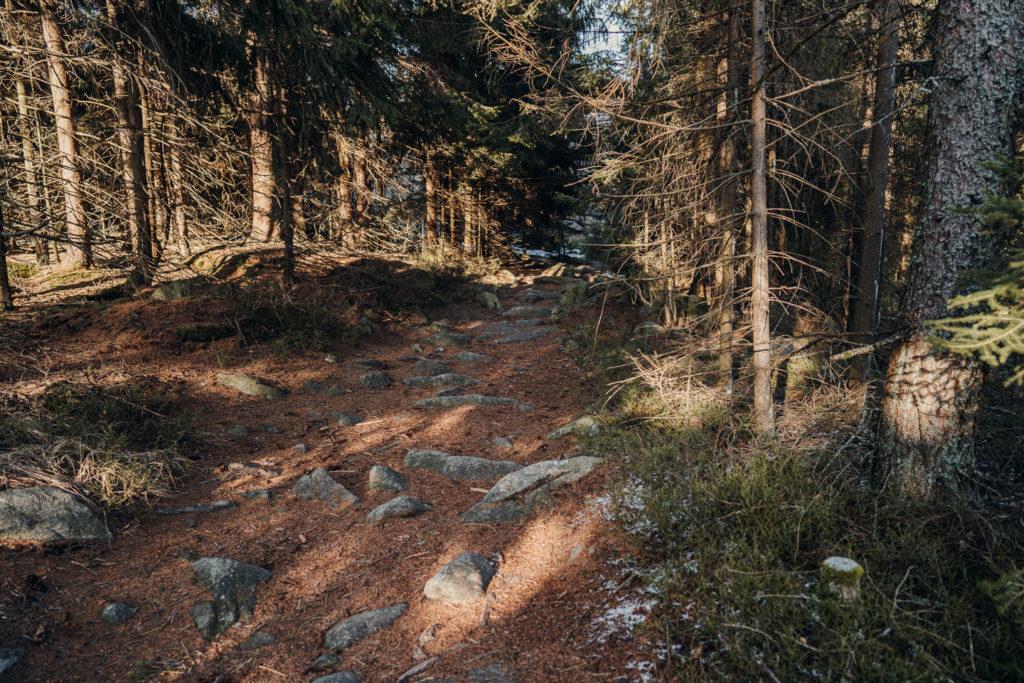Über Stock und Stein geht es, wenn man zum Rudolfstein wandern möchte