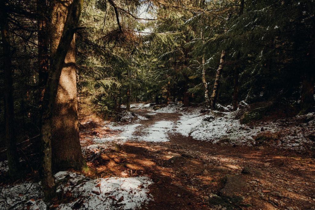Über schöne Waldwege kannst du zum Burgstein wandern
