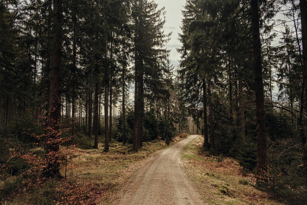 Forstweg vom Silberhaus hinauf zur Platte